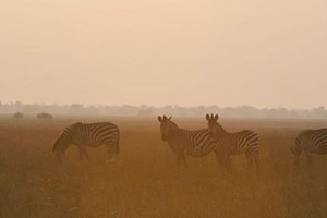Kafue Exploration - 10 Nights Exploring Northern & Central Kafue