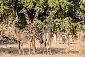 Remote Zambia - 11 Nights with Remote Africa Safaris